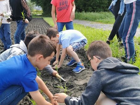 10.06.2021: Schüler pflanzen Reis in Vaduz