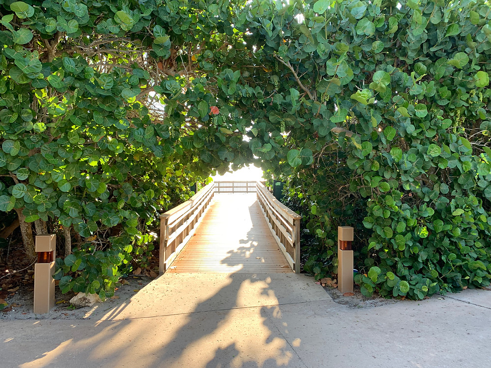 Sea Grape trees mark the way to the beach!