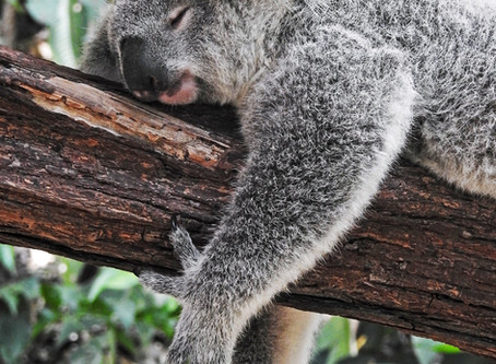 Sleep - it's more important than food or exercise