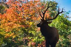 Deer 1.jpeg