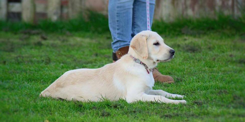 Puppy/Beginner Dog Classes - Derby