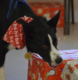 Talking Dogs Scentwork Xmas Party