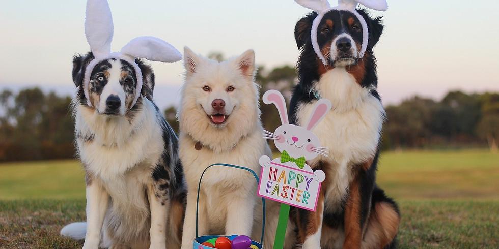 Easter Scentwork Treasure Hunt