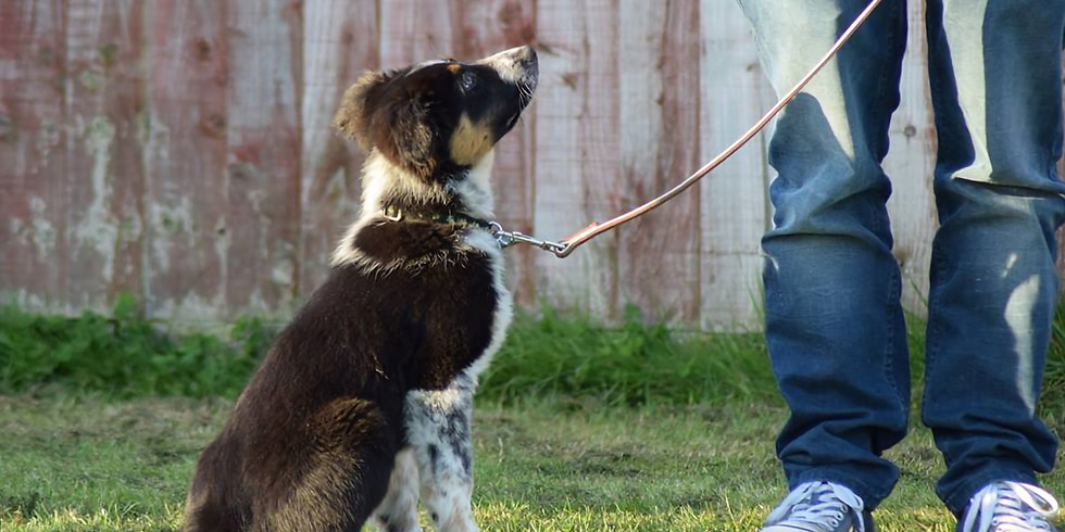 Beginner Dog/Puppy Classes, Derby (19th May 2021) - Fully booked
