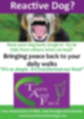 Reactive Dogs dvd
