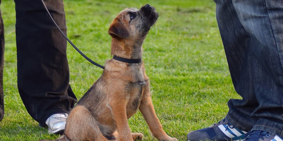 Beginner Dog/Puppy Classes, Derby (15th September 2021) - fully booked