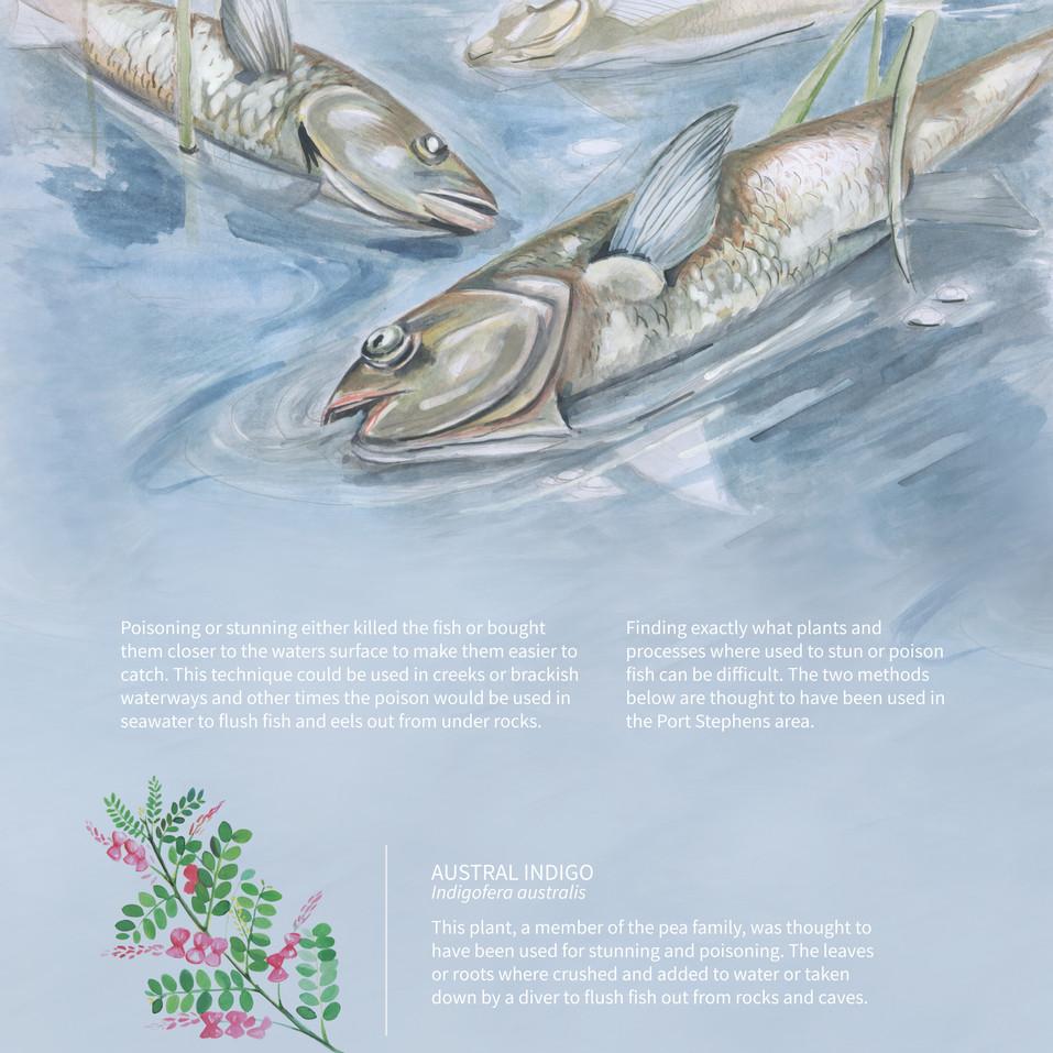 FISH STUNNING
