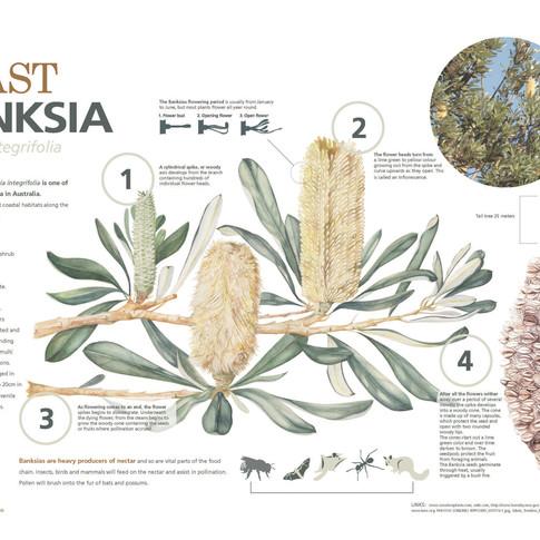 Banksia Poster