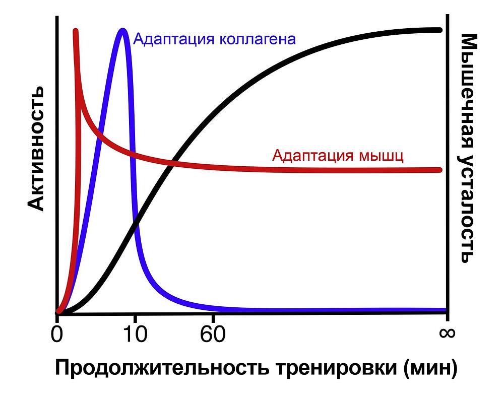 график адаптации тканей