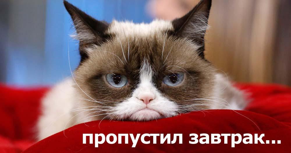 кот без завтрака не тот...