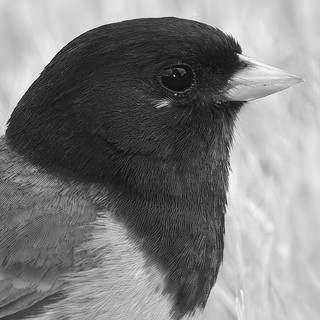 Bird-portrait-studio-2.jpg