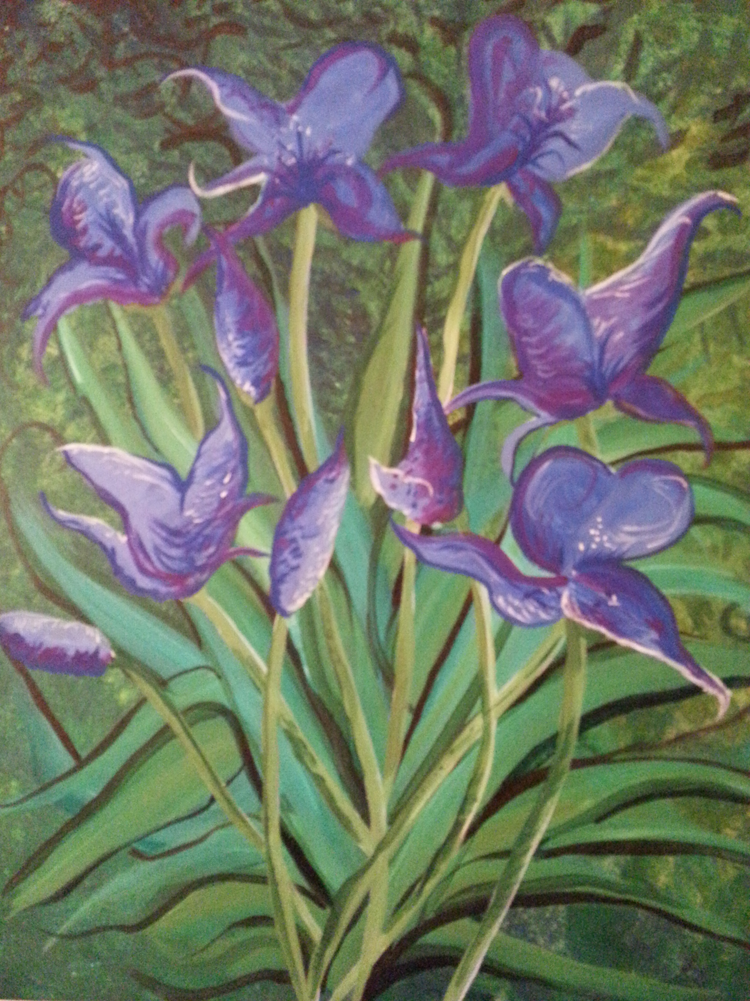 RPS Catalog_Shannon's Irises