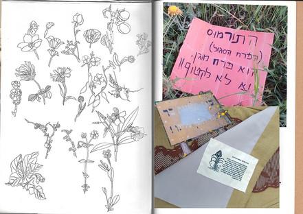 עמוד 8 נופר.jpg