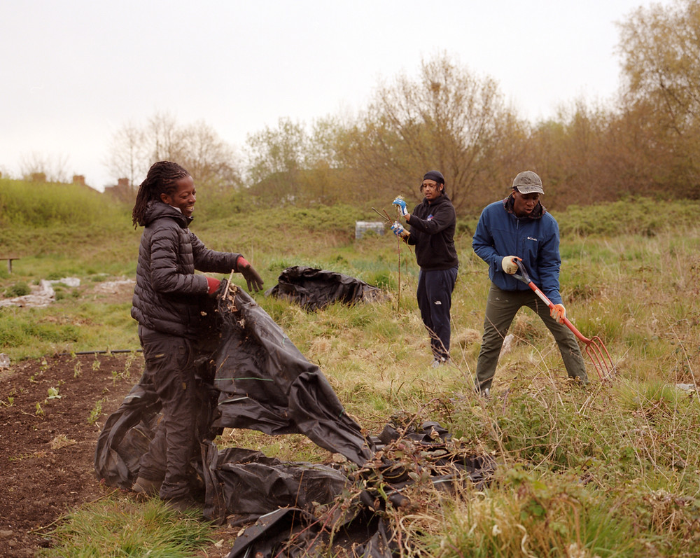 Three people work in a field. One is pulling up a piece of black plastic, one is using a garden fork, one is holding some garden waste.