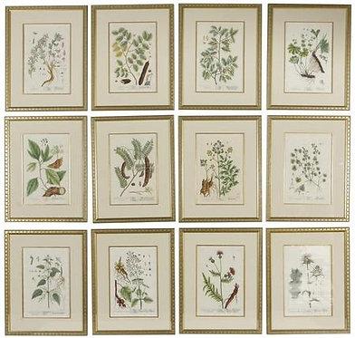 18th c. Botanicals by Elizabeth Blackwell- Each