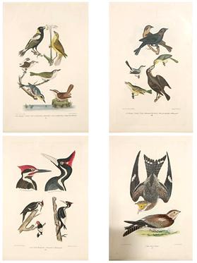 19th c. German Framed Bird Prints- Each