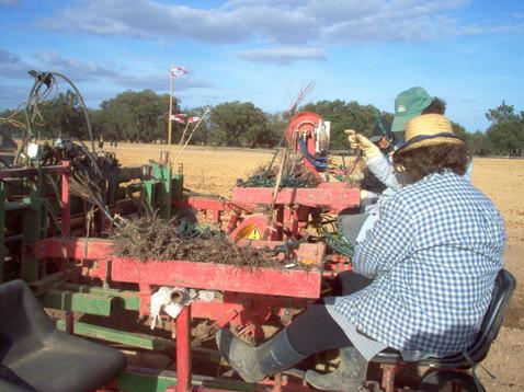 Plantação mecânica