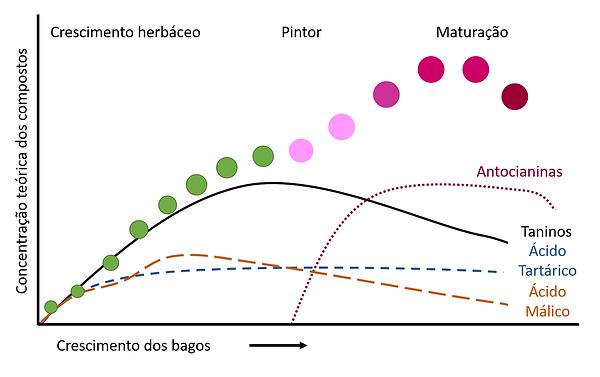 3Evolução_dos_compostos_fenólicos_e_ácid