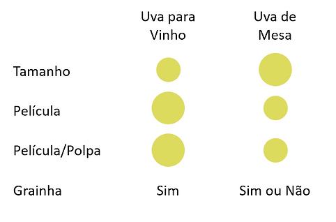 bagos_vinho_messa.png