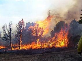 wildland-fire_d400.JPG