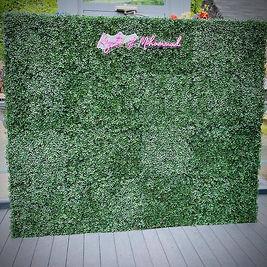 ivy wall rental