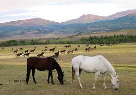 horse-herd-home-ranch.jpg