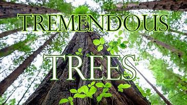Tremendous-trees.jpg
