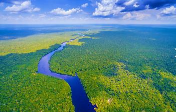 amazon rainforest pic.PNG