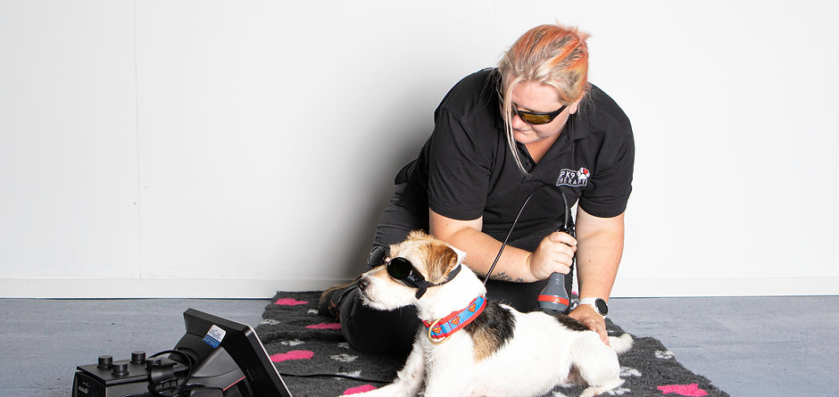 SP K9 Therapy-1.jpg
