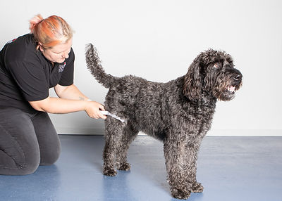 SP K9 Therapy-33.jpg