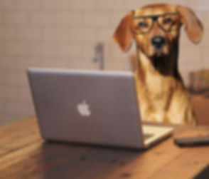 Canva - Dog Photo Montage With Laptop (1