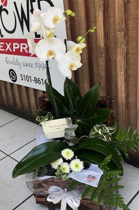 Cofre Orquídeas Condolencias