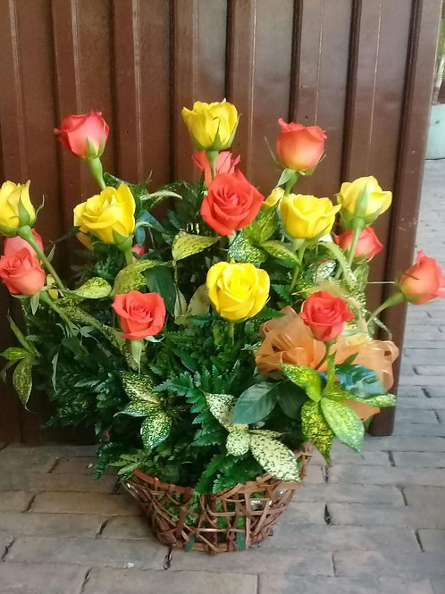 Barco de 24 Rosas