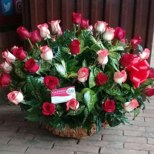 Concha de 48 Rosas