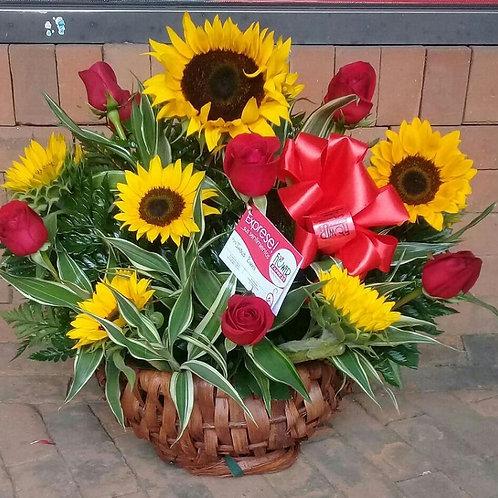 Concha Belle Sunflowers