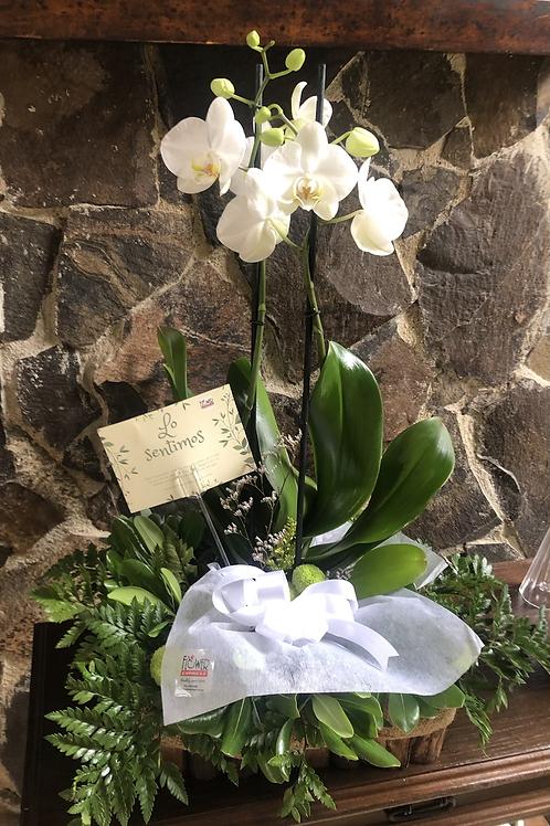 Jardinera Orquídea Condolencias
