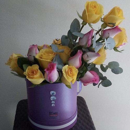 Caja Violet Petite 24R