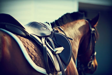 New England Saddle Fit Fitting Evauations