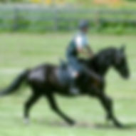 New England Saddle Fit Lise Krieger