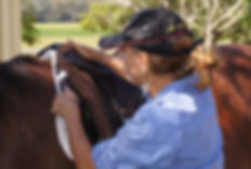 New England Saddle Fit Clinics