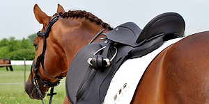 New England Saddle Fit Evaluations