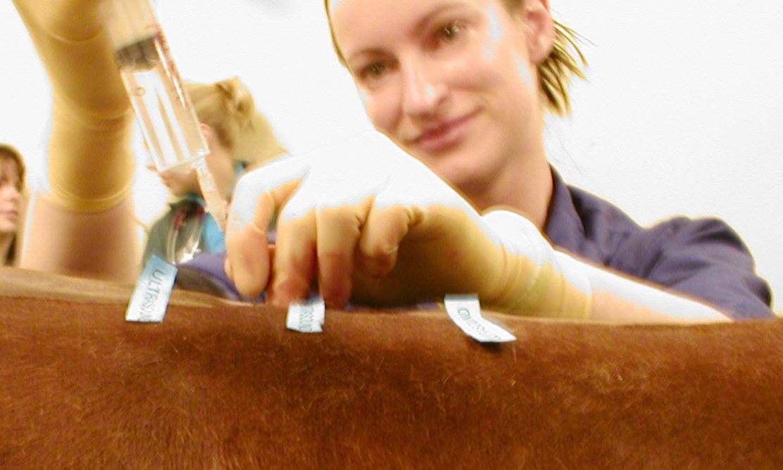 Veterinary Anaesthesia Australia