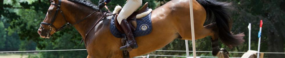 Area 12 Horse Trials