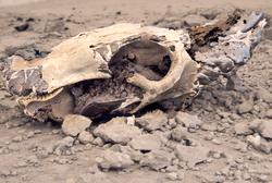 skull-closeup.png