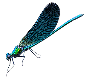 kisspng-dragonfly-net-winged-insects-dam
