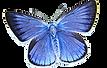 transparent-moths-and-butterflies-butter
