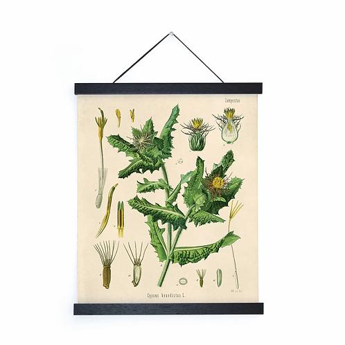 Vintage Thistle Canvas w/Magnetic Hanging Frame
