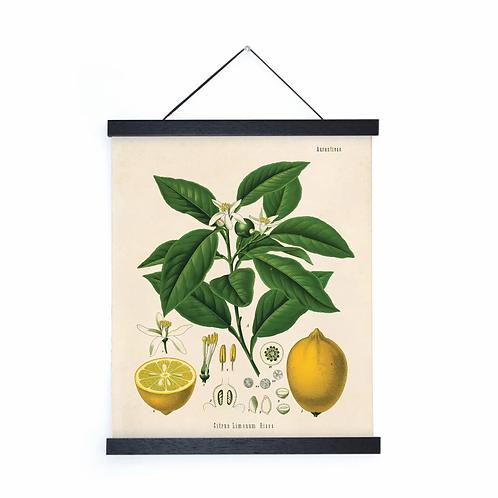 Vintage Botanical Lemon Canvas w/Magnetic Hanging Frame