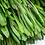 Thumbnail: Platys Foliage - Spring Green