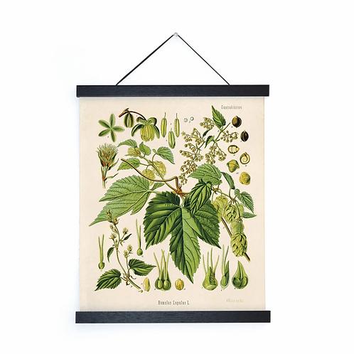 Vintage Botanical Beer Hops Canvas w/Magnetic Hanging Frame